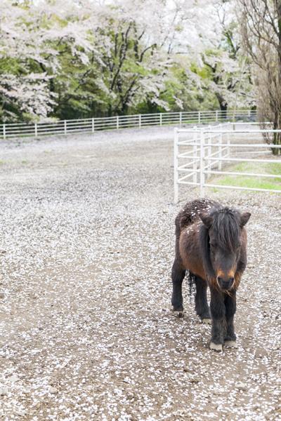 """動物たちと身近に触れあえるのも、""""牧場""""を名乗るこちらの道の駅ならでは。"""