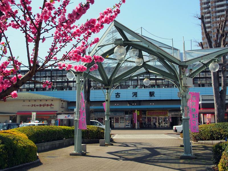 JR古河駅前。市の花であるハナモモが咲き誇る3月から4月にかけて「桃まつり」が開催されます。