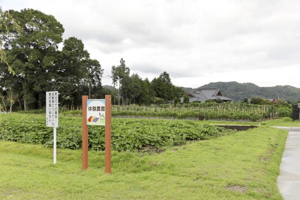 体験農園では、1カゴ200円〜収穫体験ができます。