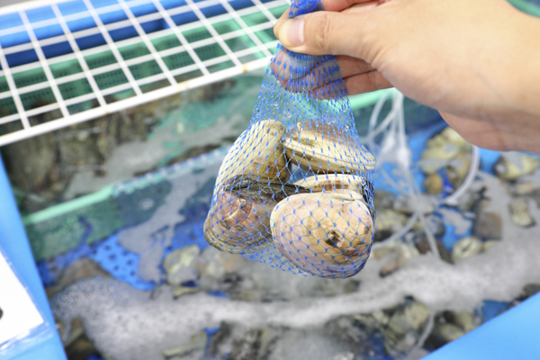 ゴロンと大ぶりサイズのハマグリのオススメの食べ方はやはり網焼き。ぷりぷりの食感をぜひ楽しんで。
