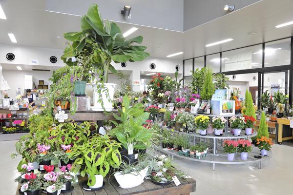 かなり広い花の販売スペース。
