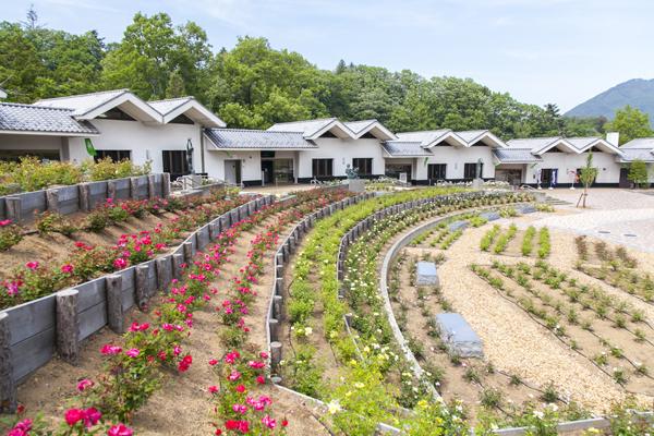 道の駅周辺には4月に3000本のバラを植栽。すでに次々と咲き始めています。