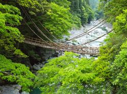 祖谷(いや)のかずら橋