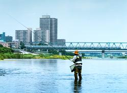 相模川のアユ釣り